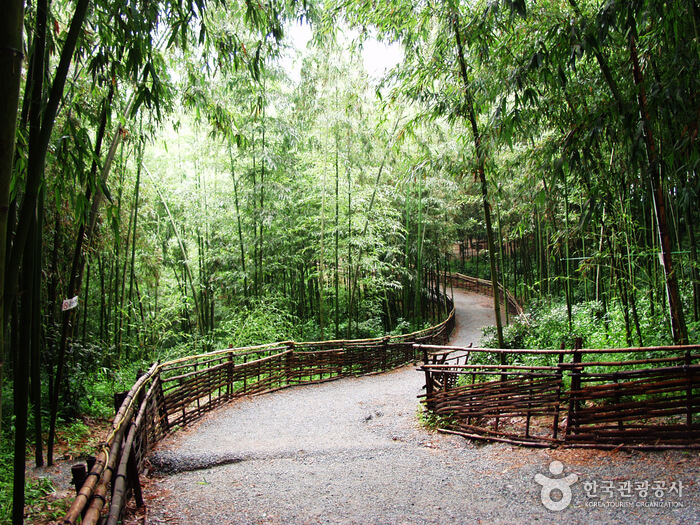 Get In Touch With Nature At Juknokwon Bamboo Garden